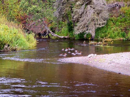 Alaska river