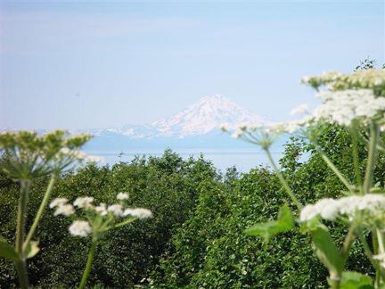 Mt. Denali framed by flowers