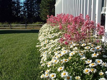 flower bed in front of porch
