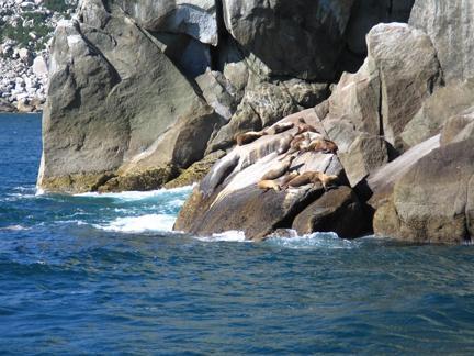 seals sunbathing on a rock