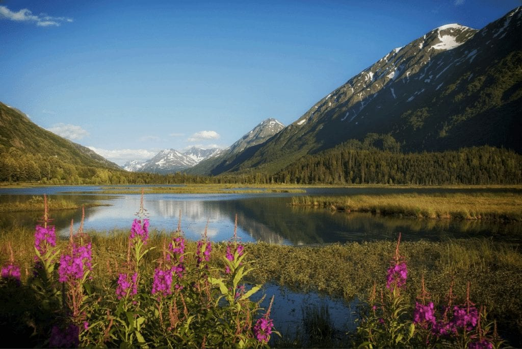 Alaskan mountain view with lake and Fireweed
