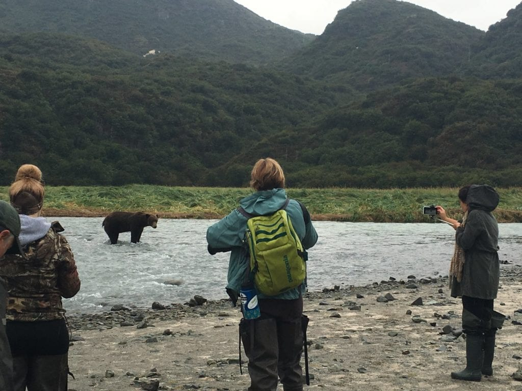 people viewing grizzly bears