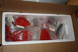 fish stored in cooler box