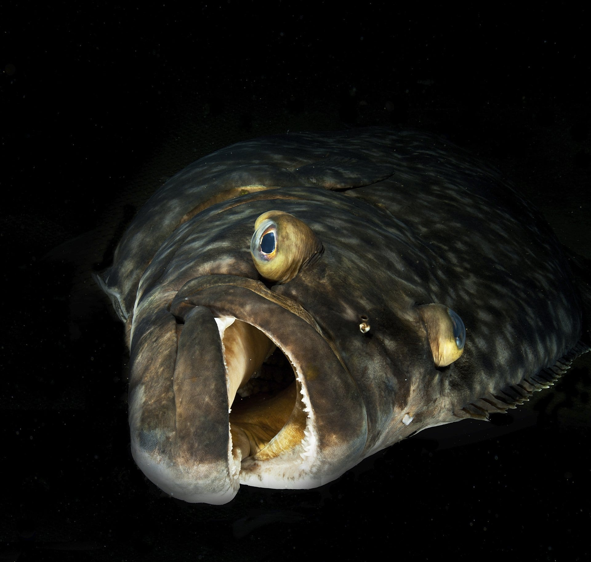 closeup of fish with mouth open